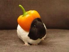 HE HAS A PEPPER ON HIS HEAD