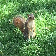 #campussquirrels