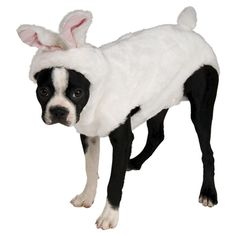 [Halloween Costumes for Dogs] Rubie's Bunny Rabbit Pet Costume, Small >>> Check out the image by visiting the link. (This is an affiliate link) Rabbit Costume, Bunny Costume, Pet Halloween Costumes, Pet Costumes, Costume Ideas, Dog Halloween, Crazy Costumes, Halloween 2016, Halloween Outfits