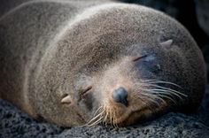 Galapagos Islands.  The Nat Geo cruise is definitely on my list of things to do before I shuffle off this mortal coil...