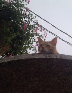 Gatto rosso lui mi aspetta sempre