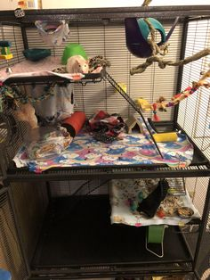 Ratty cage Pet Rats, Pets, Rat Care, Dumbo Rat, Mini Pig, Cage, Toddler Bed, Animals, Child Bed
