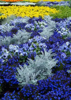 Pioneer Blues (by ken mccown) I think this combination of flowers would be stunning in a container garden