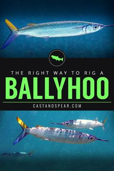 Ballyhoo fish rigging tips! If you're looking to catch marlin and other sport fi. - Ballyhoo fish rigging tips! If you're looking to catch marlin and other sport fish, then you're - Fishing Rigs, Walleye Fishing, Fishing Guide, Sport Fishing, Best Fishing, Women Fishing, Fishing Bait, Fishing Tackle, Catfish Bait