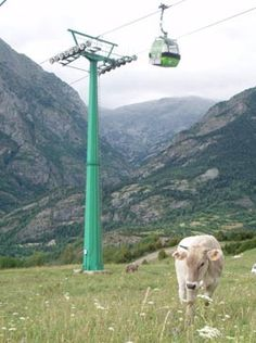 Aramón colabora en el estudio para la utilización de los pastos en la estación de esquí de Panticosa. El informe es fruto del convenio con el Centro de Investigación y Tecnología Agroalimentaria de Aragón (CITA) y la Universidad de Zaragoza.