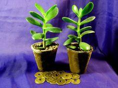 Fen Shui, Planter Pots, Succulents, Balloons, Tips, Plants, Projects, Home Decor, Women's Fashion