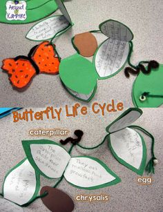 Writing about each stage of a butterfly's life cycle.