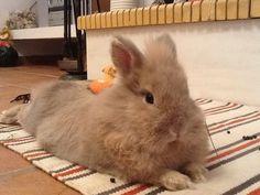 Precious rabbit