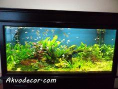 Jual Tanaman Aquascape Jakarta- Bagi anda yang sedang mencari tempat yang menyediakan berbagai jenis tanaman air untuk memperindah aquascap...
