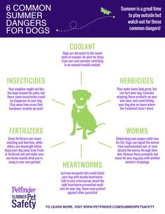 Summer is fun for everyone - especially dogs! Keep your pup safe by watching out for these common summertime health hazards.