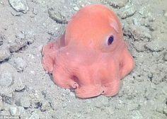 La pieuvre rose la plus mignonne du monde