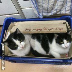 Lilli und Kitti #cats #cat