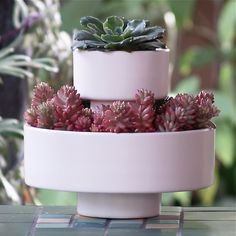 The Wedding Cake Planter from Potted - made that much more desirable with the succulents! $125