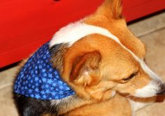 Dog tie-on bandana for the 4th of July Let by PuppyPawzBoutique