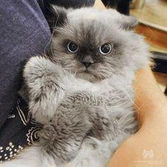 Worse than Grumpy Cat?!