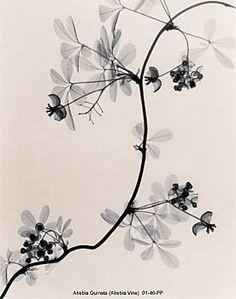 Judith McMillan photographs