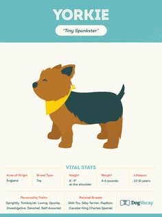 Breed Spotlight: Yorkshire Terriers #Yorkies