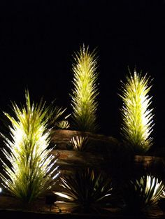 Beautifully lit night-time cacti? No - Dale Chihuly glass sculptures at the Desert Botanical Garden in Phoenix, Arizona