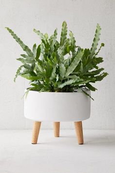 Easy Diy Garden Projects You'll Love Concrete Planters, Planter Pots, Indoor Garden, Indoor Plants, Plant Decor, Cheap Home Decor, Home Decor Accessories, Houseplants, Organic Gardening