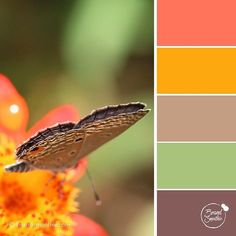 {Autumn butterfly} colour palette inspiration. . With fall arriving further up north of my tropical island, I think that this colour palette perfectly represents the warmth and sweetness of that season. Ideal for creative entrepreneurs and bloggers. . In 2 adjectives, how would you describe this colour palette? . Image by @stephaniemanuel . Learn how to use the right colours to communicate about your brand's mission and values by booking a 3 FREE tips call with me  link in my bio…
