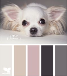 light pink and gray color combinations | Color Schemes: Pale Pink and Charcoal | ECLECTIC LIVING HOME