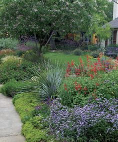 1000 images about landscaping on pinterest tropical for Tropical low maintenance plants