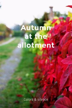 Autumn at the allotment Colors & silence: by Jens Svensson on Scandinavian Garden, Nordic Lights, Allotment, All Pictures, Told You So, Gardens, Autumn, Check, Color