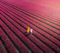 From April, Tulips in the Netherlands are most visited in Keukenhof, Lisse, or Amsterdam. Read about a location to see tulips for free without any tourists! Happy Flowers, Tulips Flowers, Tulip Fields Netherlands, Tulip Season, Secret Location, Tulip Bulbs, Black Tulips, Most Visited, Walking Tour