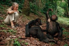 Jane Goodall Chimp Personalities Studied in Gombe Stream National Park Jane Goodall, Primates, Tanzania, National Geographic, Dian Fossey, Happy 80th Birthday, Facts About People, Animal Rights, Beautiful Creatures