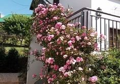 Rose cottage- Selfsorg akkommodasie in Magoebaskloof Veilige aanlyn betaling! Rose Cottage, Bird Watching, Fly Fishing, Outdoor Structures, Plants, Catering, Renting, Apartments, Gastronomia