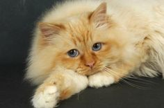Birman: Red Point coloring
