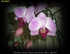 Original Beautiful Pink Orchid Decor in by ChristinaireDesigns, $14.99