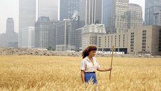 A Wheatfield Grew in Manhattan - http://art-nerd.com/newyork/a-wheatfield-grew-in-manhattan/