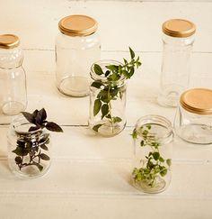 Porção individual: marmitas em potes reciclados