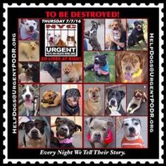 Please Share!ALL 20 DOGS ARE GOING TO DIE TOMARROW ✴ALL ARE AVAILABLE @NYCDOGS.URGENTPODR.ORG  FOR NOW