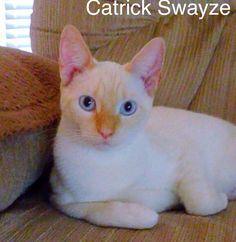 Catrick Swayze
