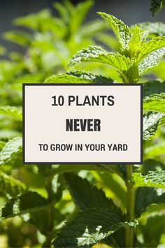 Use caution when planning your spring and summer gardens. There are some landscaping plants that never belong in the yard.