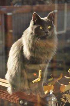Tuff from Salida, Colorado Salida Colorado, World Cat, Cool Cats, Dog Cat, Dogs, Animals, Animales, Animaux, Pet Dogs