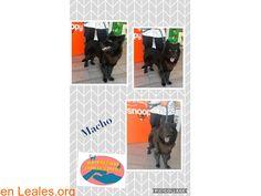 Perros encontrados  España  Las Palmas - Gran Canaria  San Fernando March 06 2018 at 09:47PM   GRAN CANARIA - Maspalomas Animal Rescue  #PERDIDO #ENCONTRADO  Contacto y Info: https://leales.org/perdidos-o-encontrados/perros-encontrados_1/gran-canaria-maspalomas-animal-rescue_i3620 #Difunde en #LealesOrg un #adopta y sé #acogida para #AdoptaNoCompres O un #SeBusca de #perro o #gatos ℹ Alguien está buscando a este perrito? Recogido hoy en San Fernando de Maspalomas parece bien cuidado pero no…