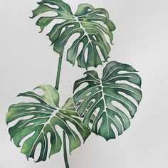 Did it in 3 different days during my baby boys naps. Sometimes he wakes after 45 minutes and I'm like ohhh noo not… Plant Painting, Plant Art, Painting & Drawing, Plant Illustration, Botanical Illustration, Watercolor Leaves, Watercolor Paintings, Watercolour, Tag Art