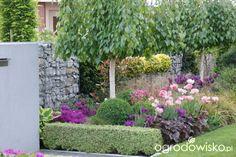 Madżenie ogrodnika cz. aktualna - strona 427 - Forum ogrodnicze - Ogrodowisko