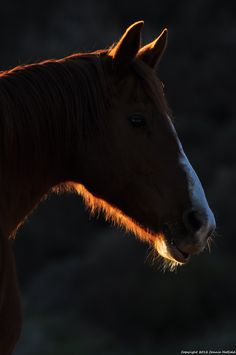 Morning horse 1
