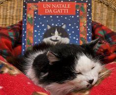 Un natale da gatti / Dec.