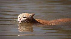 Hurricane Harvey Cat http://ift.tt/2gvbcmL