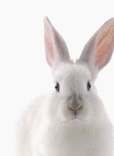 What you looking at bunny rabbit Jing Y Jang, Beautiful Creatures, Animals Beautiful, Beautiful Boys, Animals And Pets, Cute Animals, Somebunny Loves You, White Rabbits, White Bunnies