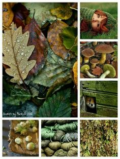 Nature Collage in Green and Brown Autumn Inspiration, Color Inspiration, Colour Schemes, Color Combos, Collages, Forest Color, Color Collage, Beautiful Collage, Colour Board