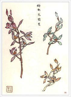 Orchids -drawing -book http://fotki.yandex.ru/users/alona-mera777/album/203876/
