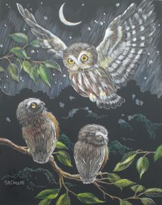 owls by Sophie Cayless