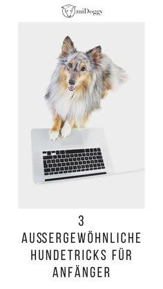 #Hund Hundetricks #Hunde Tricks Ideen Tipps Inspiration Auslastung Hundetraining Aussie Dogs, Dog Life, Dog Training, Chihuahua, Fox, Paracord, Dog Stuff, Merlin, Kind