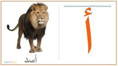 كروت عرض للحروف العربية مع الصور